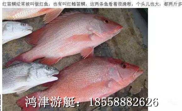 红笛鲷、也叫红鱼